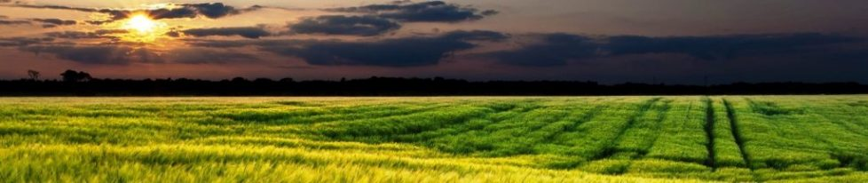 Green-Field-Sunset-Landscape-Wide-Wallpaper